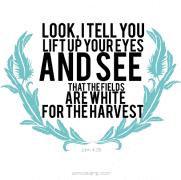 John 4:35